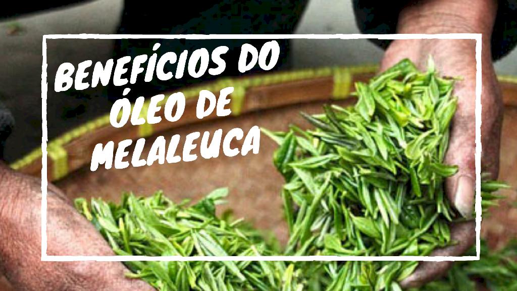 Benefícios do Óleo de Melaleuca - Tea Tree Oil