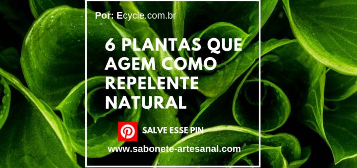 6 Plantas que Agem Como Repelente Natural